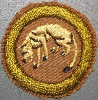 No, the predator on this badge is not meant to be the boy scout but the animal he was responsible for stalking through the woods. This was not, however, a hunting badge. Scouts had to identify footprints, follow an animal for one quarter mile, and photograph it before it could run away.
