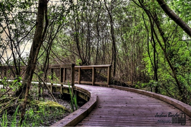 The Seattle area is home to many parks and hiking spots, but many locals recommend Carkeek Park. Cross the metal, elevated bridge over a set of train tracks and explore the gorgeous shoreline. Or, if you're up for a hike, the area has boardwalk trails for you to trek across in the park's woodier areas. There's even a little playground area for kids, and many Seattlites watch trains from the top of the crossover bridge.