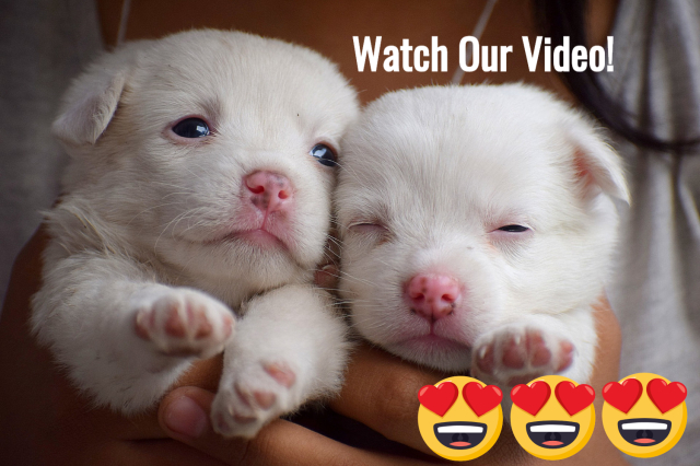 Click to   WATCH:  Your Moment of Awww!