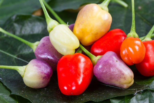 Nightshade vegetables consists of tomatoes, peppers, eggplants and white potatoes. These veggies block a certain enzyme in he body which results in overstimulation of the nervous system. They also cause glycoalkaloids to build up in the system, another precursor to anxiety.