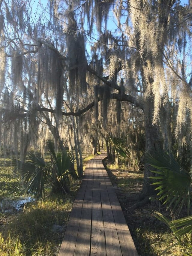 You might not think of nature trails when you think of NOLA, but this preserve is incredible and features many dirt paths and wooden boardwalks. The wooden walkway takes you over New Orlean's rich swamp land, which is an entirely unique experience. After passing through the swamp, trails lead you to areas with thick palms and brambles. The entire preserve is well-maintained, and if you're into wildlife photography, this is the trail for you! However, that does mean you'll encounter some animals on this path that you should be incredibly cautious around and avoid, like alligators and snakes.