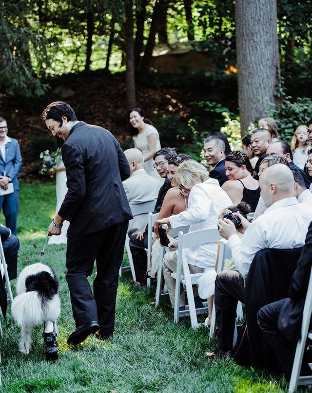 """According to Emko, """"Piggy took his job very seriously. Even though he usually stops for all admirers, he only gave respectful smiles and nods to everyone in the crowd who cooed and petted him as he passed by them, walking down the aisle."""" When he got to the end, he laid down patiently on the grass by the couple, and Emko took the rings from a pouch on Piggy's vest. Then, the good dog stayed seated throughout the ceremony."""