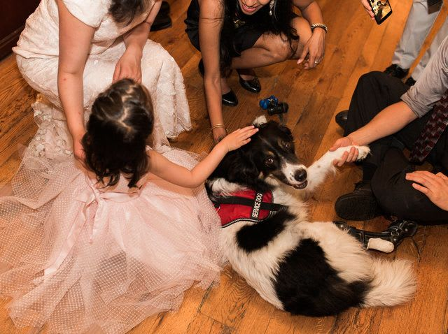 """The pup finally got to say hello to all of his many fans at the reception, getting lots of pets and giving lots of handshakes, stealing almost all of the the attention from the bride and groom. """"He went up to all his children and adult admirers alike who were waiting patiently to pet him,"""" Emko said. """"And everyone melted when he'd give them eyes or paw. The wedding photographers agreed that every wedding needed an official dog."""""""