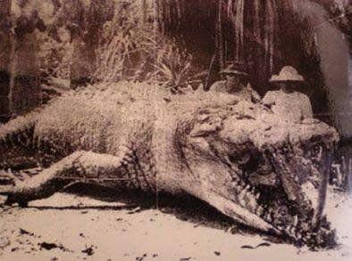Foto del ejemplar más grande jamás capturado en 1957, con 8,6 mts de largo y 1.700 kgs de peso (Australia)