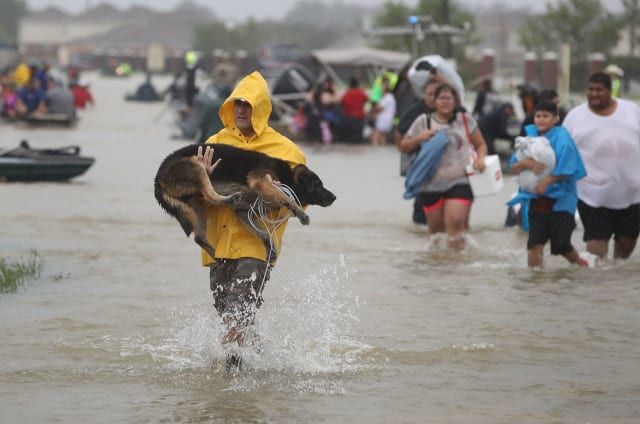 This man carries a large rescued dog out of the waters in his arms, tether cord and all.