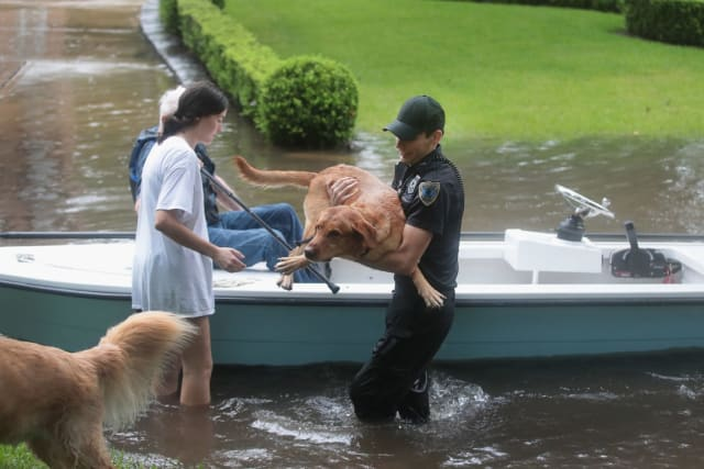 Here an officer helps two golden retrievers out of a boat and onto higher ground.