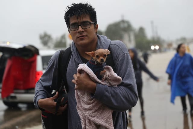 This man carries his pet chihuahua out of the flood, wrapped in a blanket and sweater to keep him from hypothermia.