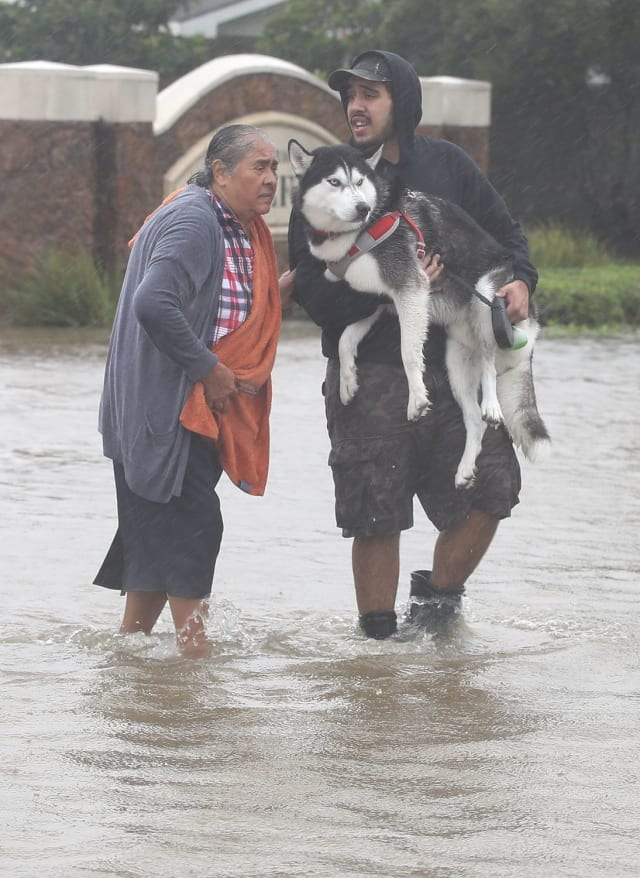 This young man holds a husky high above the dangerous waters while standing as the sole support of an elderly woman in the turbulent waters.