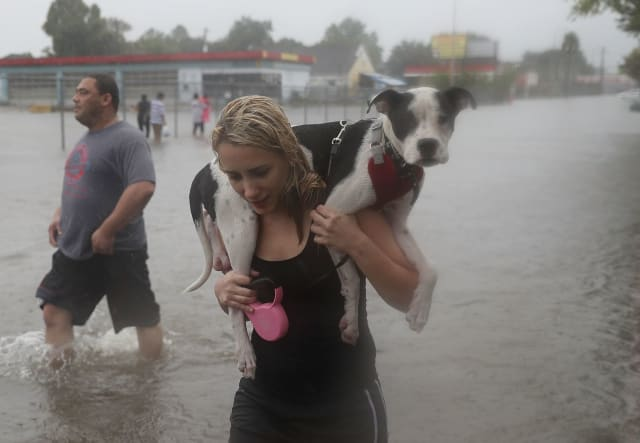 This woman carried her dog out of the flooding on her shoulders while wading through the waters.