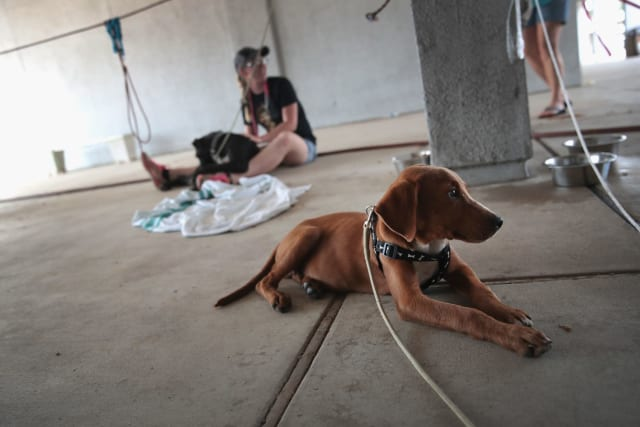 These dogs have finally found refuge at a makeshift animal shelter.