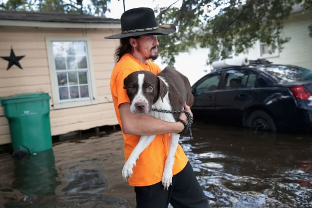 Finally, it is the puppies' larger friend's turn to be carried out of the flood waters.