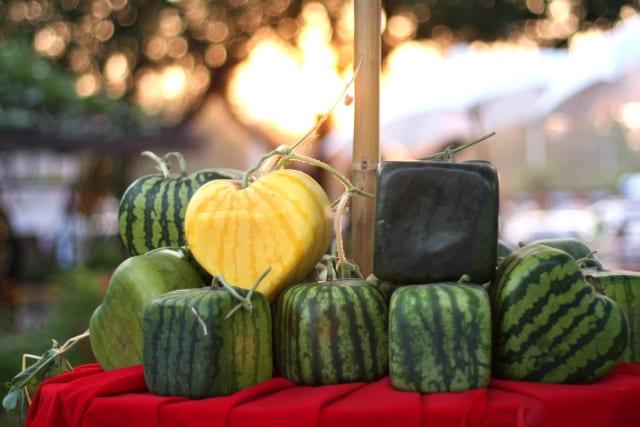 Японские фермеры выращивают квадратные арбузы. Для этого использую специальные кубические формы. Также популярны арбузы в форме сердца, пирамиды и даже лица человека.