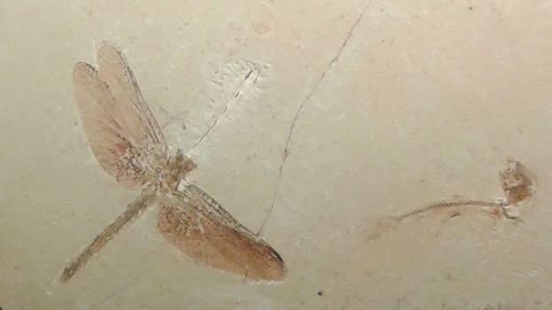 56.000 ejemplaresposeía uno de los más significativos acervos paleontológicos de América Latina.Su colección se componía mayoritariamente por fósiles de plantas y animales, provenientes de Brasil y de otros países, además de reconstituciones, réplicas, modelos y moldes