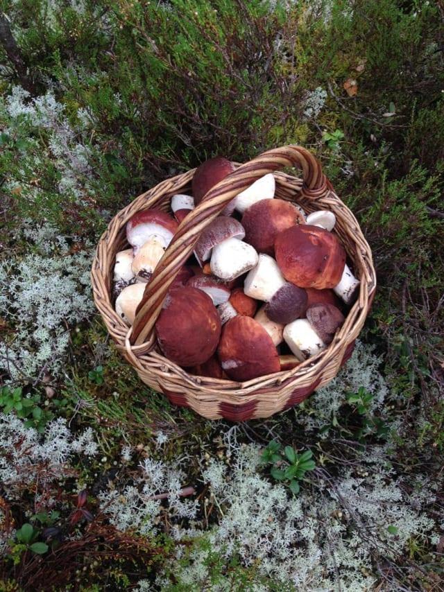 """Фото  Андрей Матюхин  """"Результат примерно полуторачасовой прогулки по лесу.причем, спросили у местных:- у вас таки пошли грибы?на что они ответили:- пошли немножко...НЕМНОЖКО блин!!!"""""""
