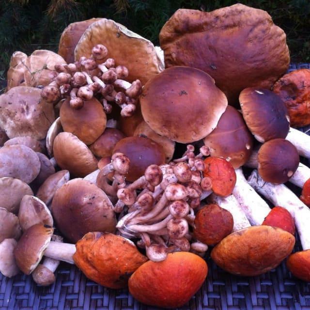 """Фото  filinagora """"Кто к нам за грибочками?!? В этом году грибов очень-очень много. Эти грибы были собраны возле коттеджа. И это только небольшая часть"""".🏻 #филинагора  #лахденпохья  #карелия #грибы  #грибыпошли  #вкусно  #грибалка"""