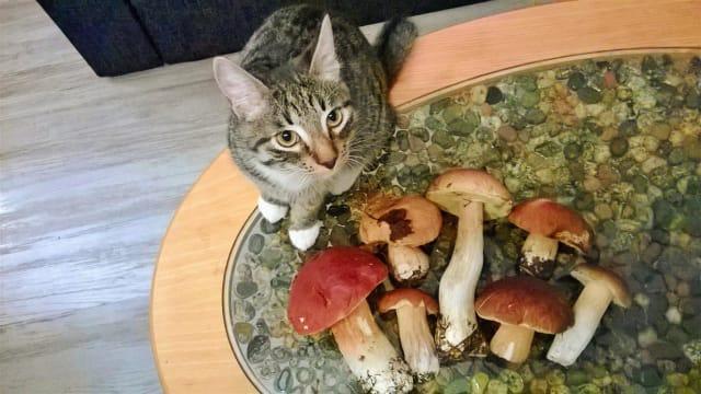"""Фото  Владимир Минеев """"А у нас кот грибы собирает;-)))))"""""""