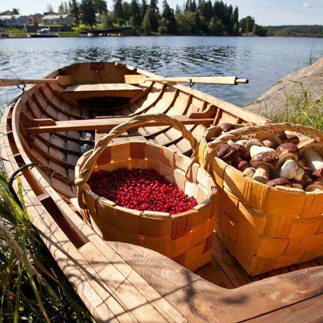 """Фото  ladogausadba """"А вы знали, что грибной сезон в лесах Карелии уже начался и продлится он всего месяц?⠀Берите с собой корзинки и приезжайте в гости всей семьей запасаться дарами леса"""".⠀🏻 #ладожскаяусадьба_грибы ⠀"""
