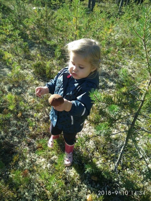 """Фото  Мария Лазарева """"Собираем грибы в Гирвасе!"""""""