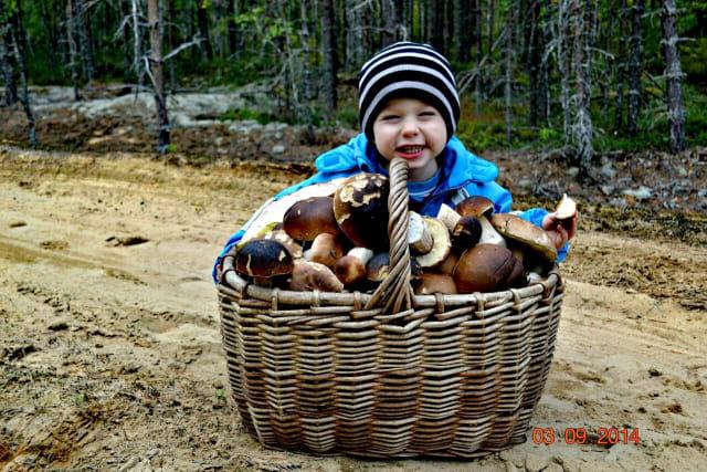 Фото Наталья ЗубковаПервое фото от читателя! Мы, правда, просили присылать фото урожая этого года. В качестве исключения поставим. От остальных ждём свежие снимки!Прогулочка #Карелия# Кудама#