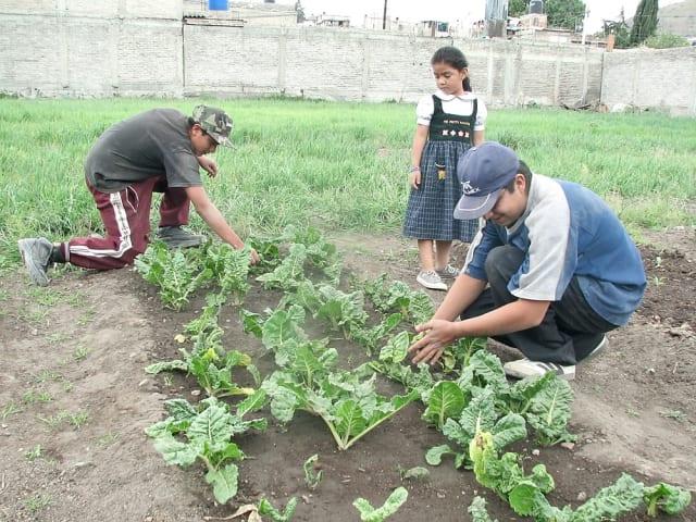 Los huertos familiares ya existen en el Estado de México. Habitantes de escasos recursos de Chimalhuacán se han convertido en granjeros comunitarios, pues han comenzado a sembrar y cosechar sus propios alimentos en huertos familiares.