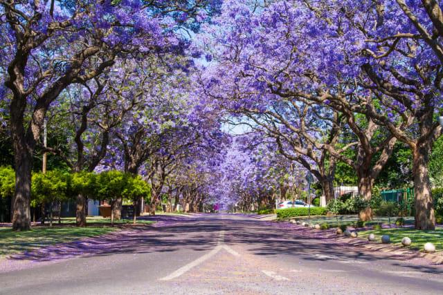 Tshwane's load shedding schedules