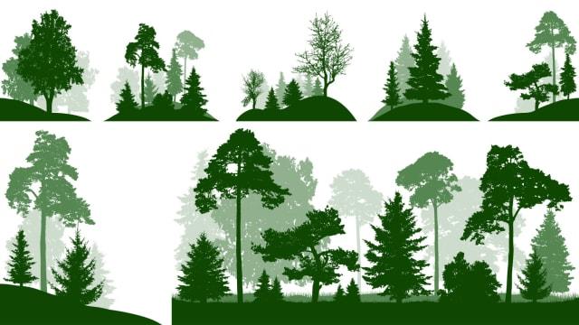 En el día, los árboles generan oxígeno, absorben dióxido de carbono y así ayudan a limpiar el aire, a su vez, benefician a las personas, a las plantas y a los animales por todo el trabajo invisible que realizan como almacén de carbono, actúan también como un controlador del clima. Un mundo sin árboles implicaría la muerte de muchos seres vivos así como la contaminación del ambiente. Se estima que el 30 por ciento de superficie terrestre está cubierta por árboles, pero sólo en una década se pierden hasta siete millones de hectáreas de árboles, es de importancia que para preservar la conservación de los bosques tomemos conciencia de dónde vienen las cosas que consumimos y qué impacto brindan estos al medio ambiente.