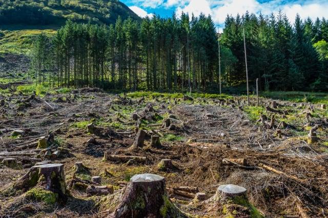 La deforestación se traduce en la extinción de los bosques del mundo, cada año al menos 13 millones de hectáreas de bosques son talados, hecho que causa mayor contaminación universal,la tala de árboles y bosques, muchas veces, se convierte en parte del problema del cambio climático. Cuando se talan árboles por su madera o para combustible (o cuando se queman los bosques para la agricultura) su CO2 almacenado se libera al aire y de esta manera genera que el planeta se caliente, el calentamiento del planeta origina que ocurran fenómenos naturales que amenazan la existencia humana. Es importante evitar la deforestación.