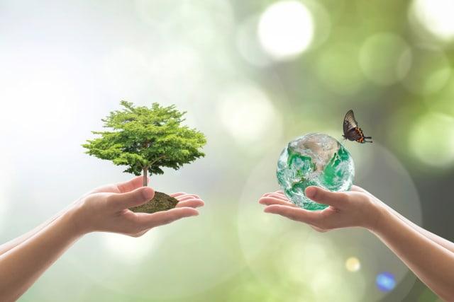 Repoblar espacios talados de árboles nuevo trae grandes beneficios a la humanidad, entre los principales producen oxígeno, purifican el aire, generan suelos fértiles, evitan la erosión, mantiene limpios los ríos, sirven como el refugio de la fauna, reducen la temperatura del suelo, entre otros, por estas razones es importantes exigirle a las autoridades que cada espacio talado se convierta en un espacio reforestado.