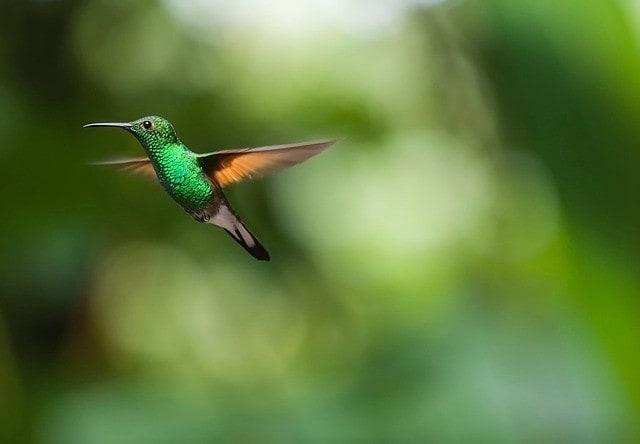 Al menos 80 especies de aves entre colibríes y aves migratorias habitan en el Cerro de Monserrate.