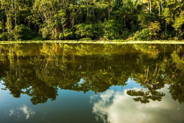 """El primer capítulo de Querida Amazonia se centra en el """"Sueño social"""" (8). Destaca que """"un verdadero planteo ecológico"""" es también un """"planteo social"""" y, si bien aprecia el """"buen vivir"""" de los indígenas, advierte contra el """"conservacionismo"""" que solo se preocupa por el medioambiente. En tonos vibrantes, habla de """"injusticia y crimen"""" (9-14). Recuerda que Benedicto XVI ya había denunciado """"la devastación ambiental de la Amazonia"""". Los pueblos originarios, advierte, sufren el """"sometimiento"""" tanto de los poderes locales como de los externos. Para el Papa las operaciones económicas que alimentan la devastación, los asesinatos, la corrupción, merecen el nombre de """"injusticia y crimen"""". Y con Juan Pablo II reitera que la globalización no debe convertirse en un nuevo colonialismo."""