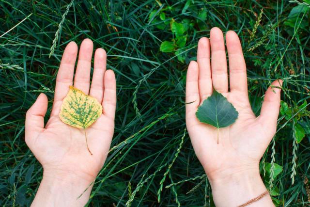 """El tercer capítulo, """"Un Sueño Ecológico"""", es el que se relaciona más inmediatamente con la EncíclicaLauda to si' . Cita a Pablo Neruda y a otros poetas locales sobre la fuerza y la belleza del río Amazonas. Con sus poemas, escribe, """"nos ayudan a liberarnos del paradigma tecnocrático y consumista que destroza la naturaleza"""". En la introducción (41-42) se destaca que en la Amazonia existe una estrecha relación del ser humano con la naturaleza. El cuidado de nuestros hermanos como el Señor nos cuida, reitera, """"es la primera ecología que necesitamos"""". El cuidado del medioambiente y el cuidado de los pobres son """"inseparables"""". Francisco, entonces, vuelca su atención al """"sueño hecho de agua"""" (43-46)."""