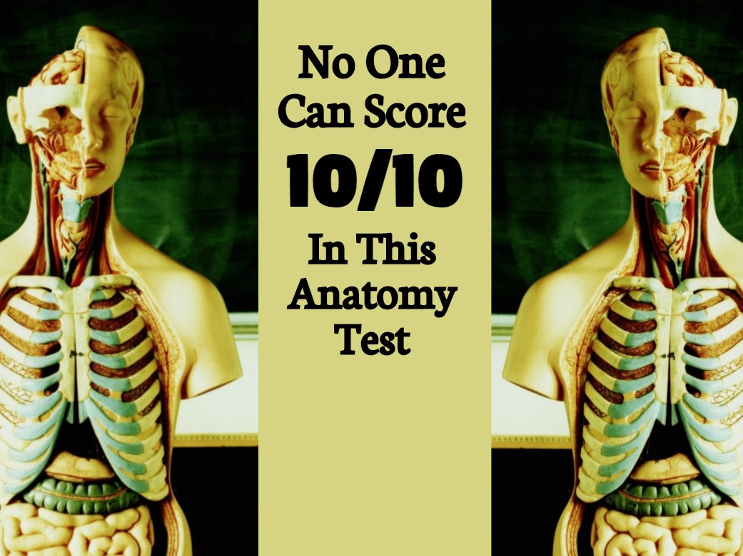 No One Can Score 1010 In This Anatomy Test And Its Driving The